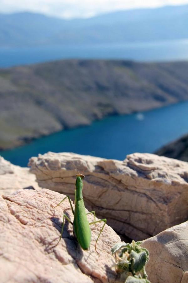 Bogomolka opazuje zaliv uvala Vela Luka.