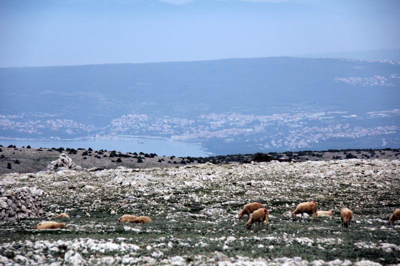 Obzova otok Krk pogled na mesto Krk