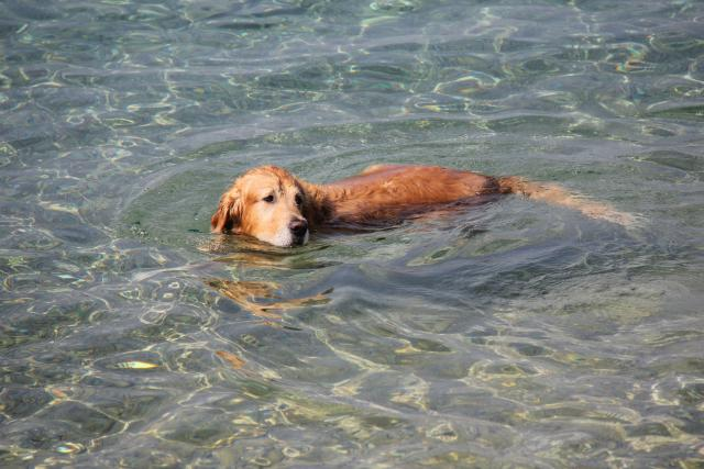 Pasja plaža